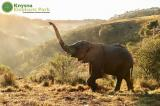 Knysna Elephant Park: Knysna Elephant Park