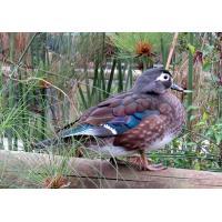 Birds of Eden free flight sanctuary Plettenberg Bay - Garden Route South Africa