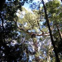 Garden of Eden - Knysna Plettenberg Bay Garden Route South Africa