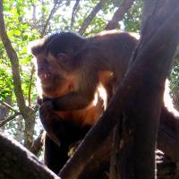 Monkeyland primate sanctuary Plettenberg Bay - Garden Route South Africa