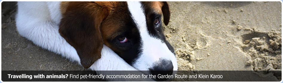 Find pet-friendly accommodation for towns in the Garden Route and Klein Karoo